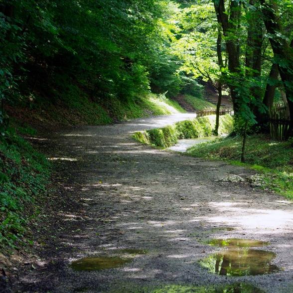 Trail_in_Tršić - Copy-588x588